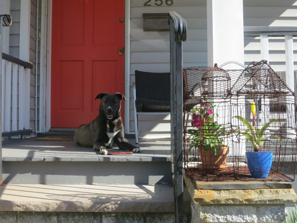 front door with molly up close